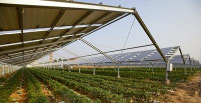 Agri-PV Anlage